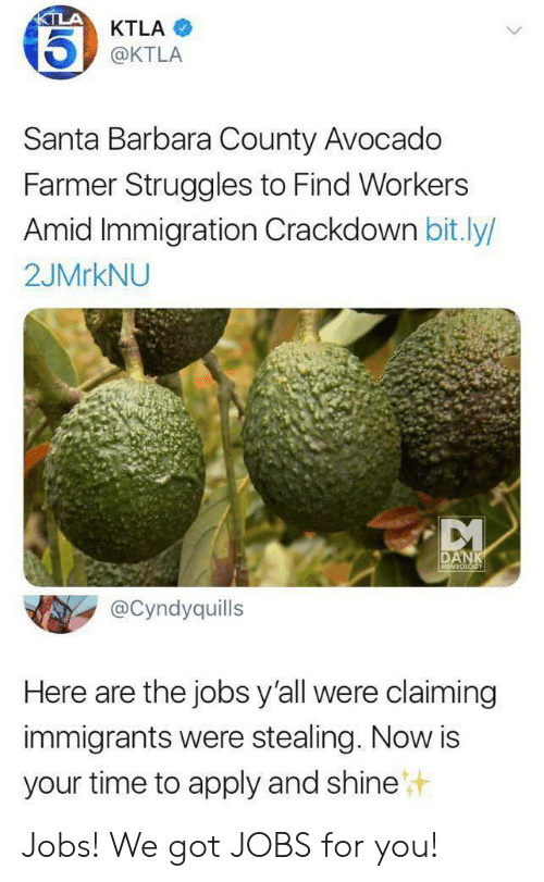 Ktla: KTLA  KTLA  @KTLA  Santa Barbara County Avocado  Farmer Struggles to Find Workers  Amid Immigration Crackdown bit.ly/  2JMRKNU  DANK  MEMEOLOGY  @Cyndyquills  Here are the jobs y'all were claiming  immigrants were stealing. Now is  your time to apply and shine Jobs! We got JOBS for you!