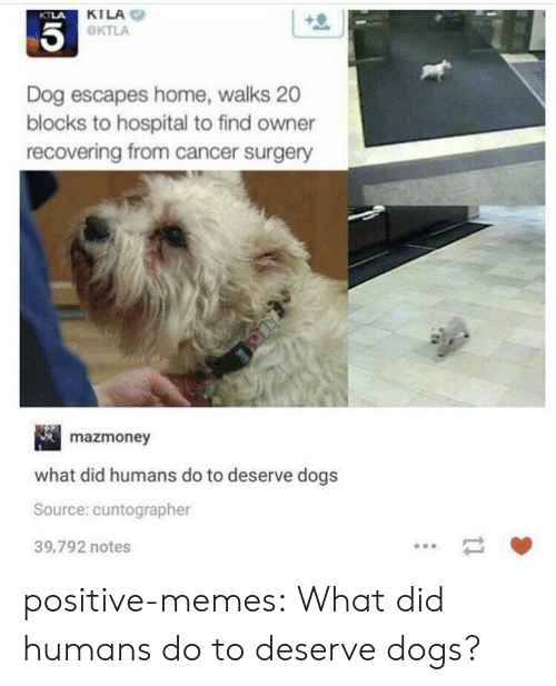 Ktla: KTLA  OKTLA  KTLA  Dog escapes home, walks 20  blocks to hospital to find owner  recovering from cancer surgery  mazmoney  what did humans do to deserve dogs  Source: cuntographer  39,792 notes positive-memes:  What did humans do to deserve dogs?
