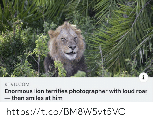 loud: KTVU.COM  Enormous lion terrifies photographer with loud roar  - then smiles at him https://t.co/BM8W5vt5VO