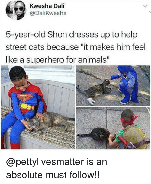 "Animals, Cats, and Memes: Kwesha Dali  @DaliKwesha  5-year-old Shon dresses up to help  street cats because ""it makes him feel  like a superhero for animals @pettylivesmatter is an absolute must follow!!"