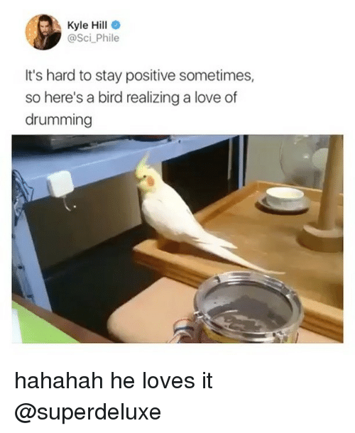 Kylee: Kyle Hill  @Sci Phile  It's hard to stay positive sometimes,  so here's a bird realizing a love of  drumming hahahah he loves it @superdeluxe