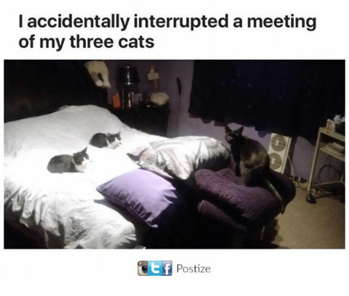 Cats, Memes, and 🤖: l accidentally interrupted a meeting  of my three cats  Ef  Postize