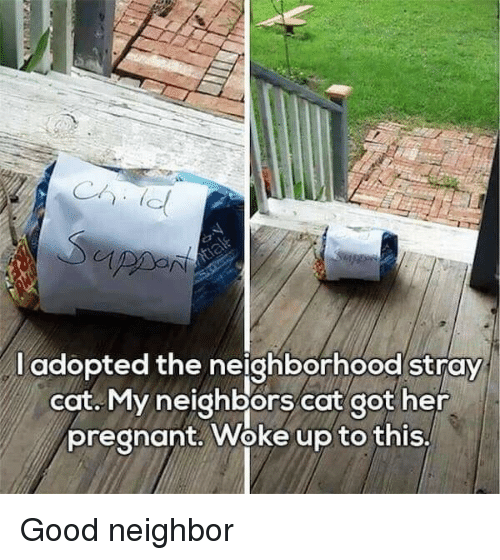 Pregnant, Good, and Neighbors: l adopted the neighborhood stray  cat. My neighbors cat got her  pregnant. Woke up to this, Good neighbor