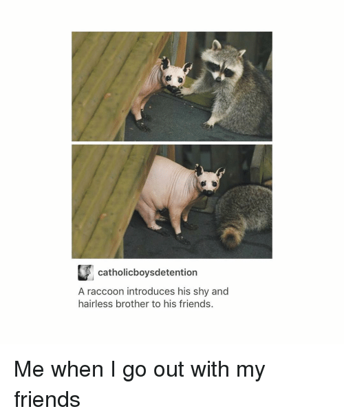 Friends, Tumblr, and Raccoon: L catholicboysdetention  A raccoon introduces his shy and  hairless brother to his friends. Me when I go out with my friends