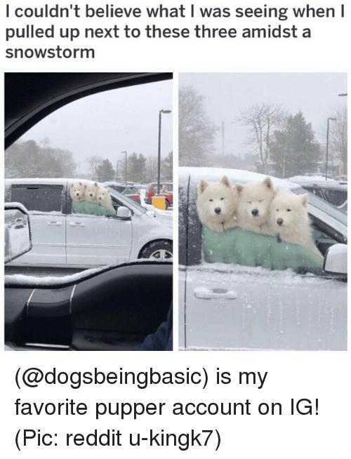 Memes, Reddit, and 🤖: l couldn't believe what I was seeing when I  pulled up next to these three amidst a  snowstorm (@dogsbeingbasic) is my favorite pupper account on IG! (Pic: reddit u-kingk7)