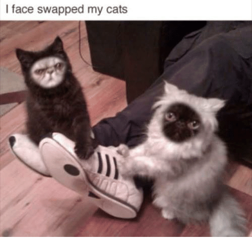 L Face Swapped My Cats