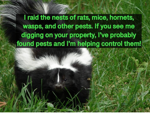 wasps: l raid the nests of rats, mice, hornets,  wasps, and other pests. If you see me  digging on your property, I've probably  found pests and I'm helping control them!