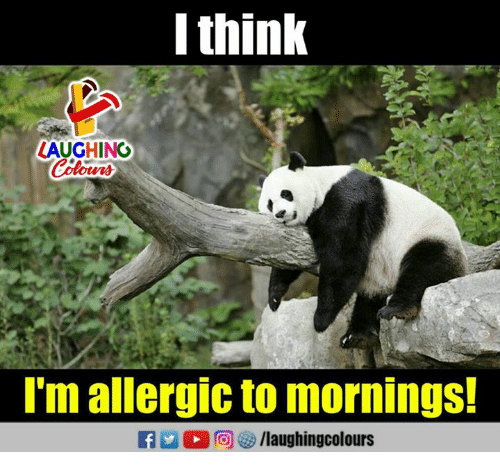 Indianpeoplefacebook, Think, and Mornings: l think  AUGHING  I'm allergic to mornings!