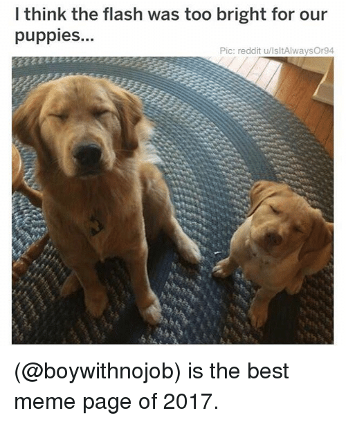 Meme, Memes, and Puppies: l think the flash was too bright for our  puppies.  Pic: reddit u/lsltAlwaysOr94 (@boywithnojob) is the best meme page of 2017.