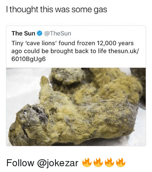 Frozen, Life, and Memes: l thought this was some gas  The Sun@TheSun  Tiny 'cave lions' found frozen 12,000 years  ago could be brought back to life thesun.uk/  6010BgUg6 Follow @jokezar 🔥🔥🔥🔥