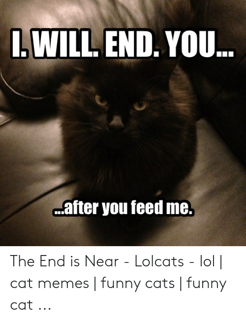 The End Is Near Meme: L WILL END. YOU..  after you feed me. The End is Near - Lolcats - lol | cat memes | funny cats | funny cat ...