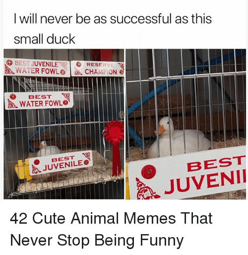 Juvenile: l will never be as successful as this  small duck  BEST JUVENILE  逸.WATER FOWL㊥ | se, cHAni 'On@  RESERYE  BEST  WATER FOWL。  BEST  JUVENILE。《  BEST  JUVENII 42 Cute Animal Memes That Never Stop Being Funny