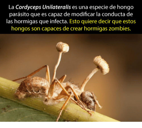 Good Morning Everybody Que Quiere Decir : Best memes about cordyceps