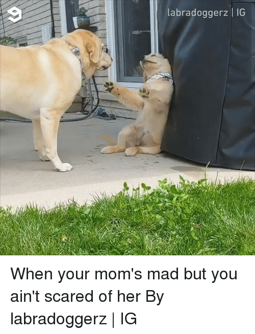Dank, Moms, and Mad: labradoggerz | IG When your mom's mad but you ain't scared of her  By labradoggerz | IG