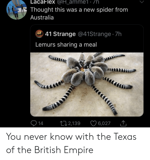 Empire: LacaFlex @H_amme1 . /h  Thought this was a new spider from  Australia  41 Strange @41 Strange 7h  Lemurs sharing a meal  14  12,139  6,027 You never know with the Texas of the British Empire