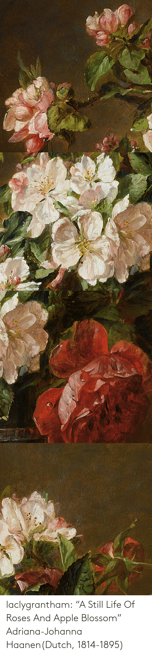 "html: laclygrantham:  ""A Still Life Of Roses And Apple Blossom"" Adriana-Johanna Haanen(Dutch, 1814-1895)"