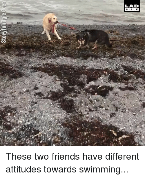 Friends, Memes, and Swimming: LAD  BIBL E  ar These two friends have different attitudes towards swimming...