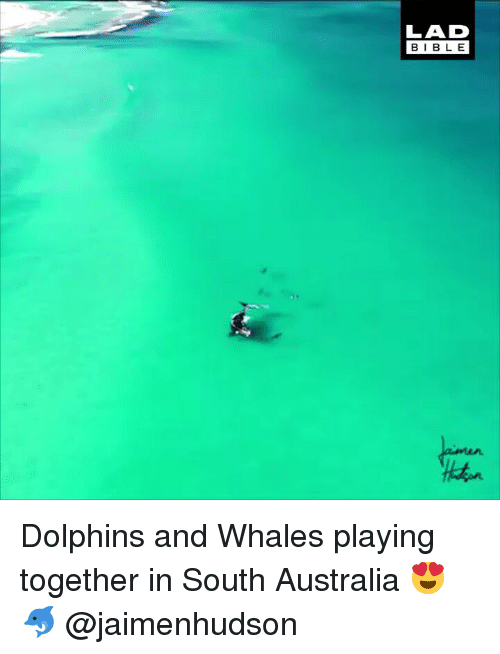 Memes, Australia, and Dolphins: LAD  BIBL E Dolphins and Whales playing together in South Australia 😍🐬 @jaimenhudson