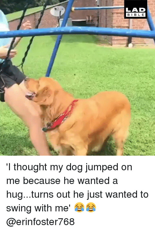 Memes, Jumped, and Thought: LAD  BIBL E 'I thought my dog jumped on me because he wanted a hug...turns out he just wanted to swing with me' 😂😂 @erinfoster768