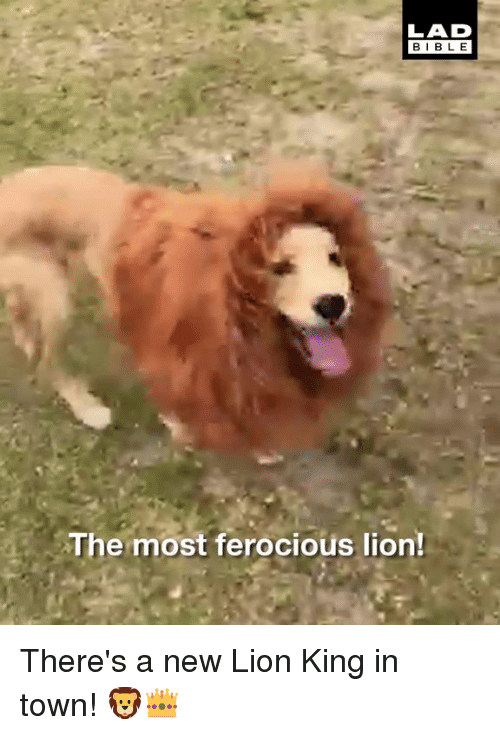 Ferocious: LAD  BIBL E  The most ferocious lion! There's a new Lion King in town! 🦁👑