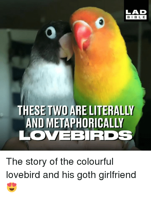 Colourful: LAD  BIBL E  THESE TWO ARE LITERALLY  AND METAPHORICALLY  LOVEBRDs The story of the colourful lovebird and his goth girlfriend 😍