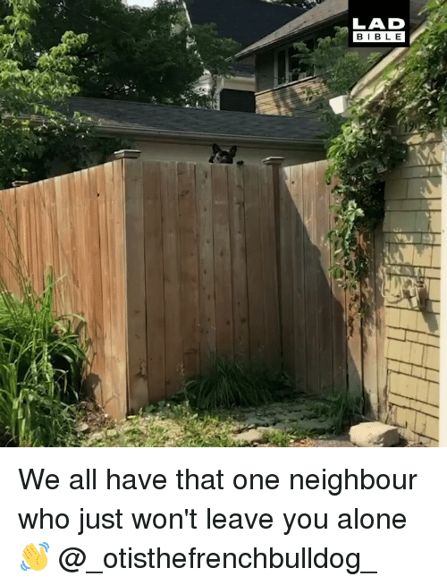 Being Alone, Memes, and 🤖: LAD  BIBL E We all have that one neighbour who just won't leave you alone 👋 @_otisthefrenchbulldog_