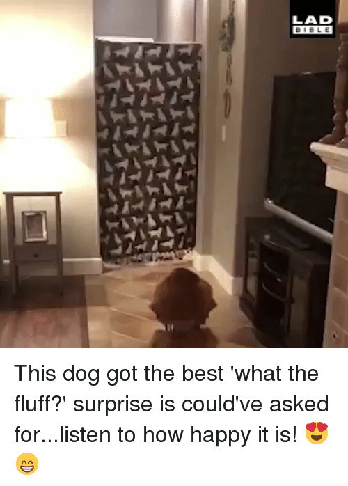 Memes, Best, and Bible: LAD  BIBLE  30 This dog got the best 'what the fluff?' surprise is could've asked for...listen to how happy it is! 😍😁