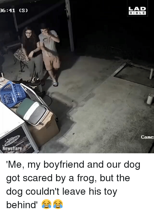 Memes, Bible, and Boyfriend: LAD  BIBLE  36:41 (S)  Came  Newsflar 'Me, my boyfriend and our dog got scared by a frog, but the dog couldn't leave his toy behind' 😂😂