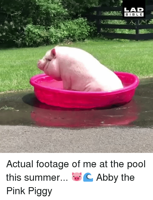 Dank, Summer, and Bible: LAD  BIBLE Actual footage of me at the pool this summer... 🐷🌊  Abby the Pink Piggy