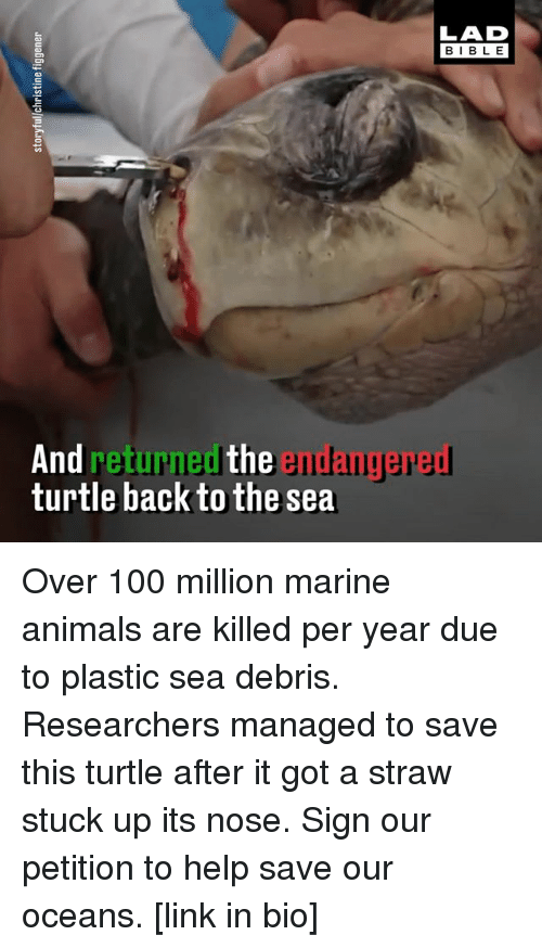 Anaconda, Animals, and Memes: LAD  BIBLE  And returned the endangered  turtle back to the sea Over 100 million marine animals are killed per year due to plastic sea debris. Researchers managed to save this turtle after it got a straw stuck up its nose. Sign our petition to help save our oceans. [link in bio]