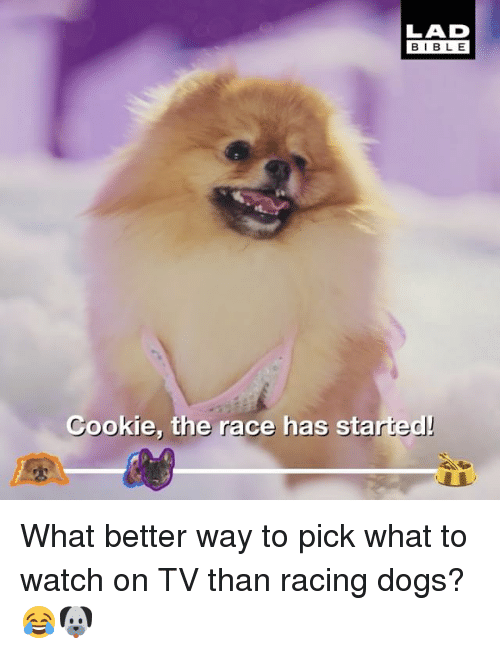 Dogs, Memes, and Bible: LAD  BIBLE  Cookie, the race has started! What better way to pick what to watch on TV than racing dogs? 😂🐶
