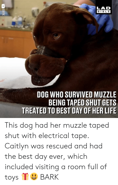 electrical: LAD  BIBLE  DOG WHO SURVIVED MUZZLE  BEING TAPED SHUT GETS  TREATED TO BEST DAY OF HER LIFE This dog had her muzzle taped shut with electrical tape. Caitlyn was rescued and had the best day ever, which included visiting a room full of toys 🎁😃  BARK