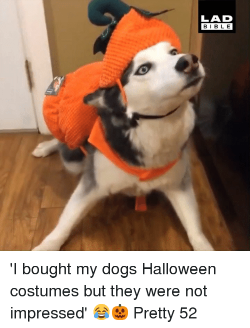 not impressed: LAD  BIBLE 'I bought my dogs Halloween costumes but they were not impressed' 😂🎃  Pretty 52