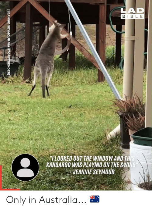 """kangaroo: LAD  BIBLE  """"ILOOKED OUT THE WINDOW AND THIS  KANGAROO WAS PLAYING ON THE SWING  JEANNIE SEYMOUR  [JEANNIE SEYMOUR VIA STORYTRENDER]T Only in Australia... 🇦🇺"""