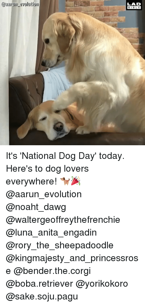 dog lovers: LAD  BIBLE It's 'National Dog Day' today. Here's to dog lovers everywhere! 🐕🎉 @aarun_evolution @noaht_dawg @waltergeoffreythefrenchie @luna_anita_engadin @rory_the_sheepadoodle @kingmajesty_and_princessrose @bender.the.corgi @boba.retriever @yorikokoro @sake.soju.pagu