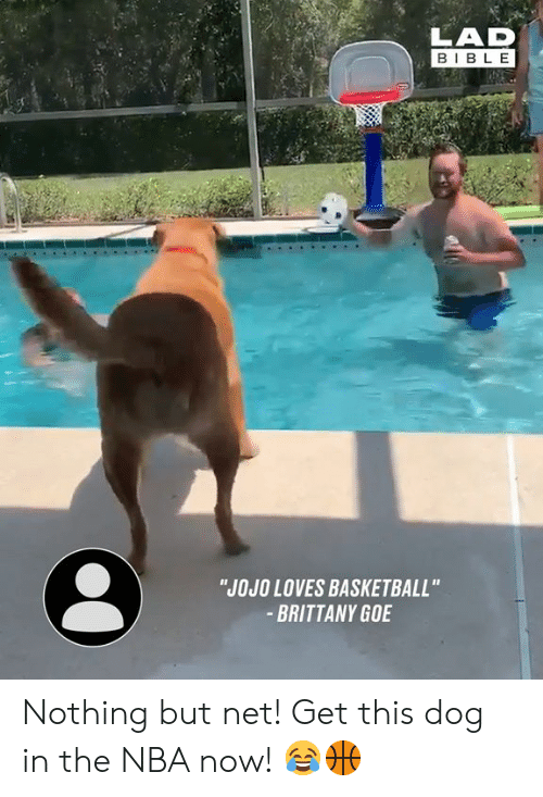 "goe: LAD  BIBLE  ""JOJO LOVES BASKETBALL""  BRITTANY GOE Nothing but net! Get this dog in the NBA now! 😂🏀"