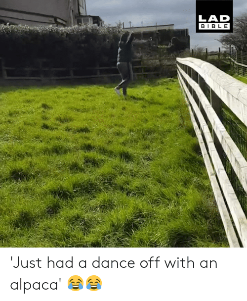 dance off: LAD  BIBLE 'Just had a dance off with an alpaca' 😂😂