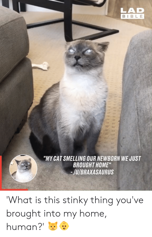 "smelling: LAD  BIBLE  ""MY CAT SMELLING OUR NEWBORN WE JUST  BROUGHT HOME""  -/u/BRAXASAURUS 'What is this stinky thing you've brought into my home, human?' 🐱👶"