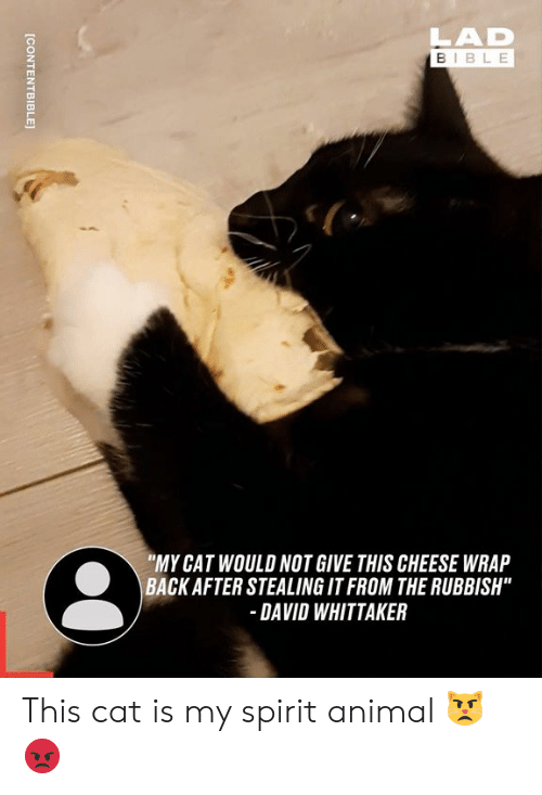 "rubbish: LAD  BIBLE  ""MY CAT WOULD NOT GIVE THIS CHEESE WRAP  BACK AFTER STEALING IT FROM THE RUBBISH""  DAVID WHITTAKER  [CONTENTBIBLE This cat is my spirit animal 😾😡"