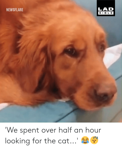 half an hour: LAD  BIBLE  NEWSFLARE 'We spent over half an hour looking for the cat...' 😂😴