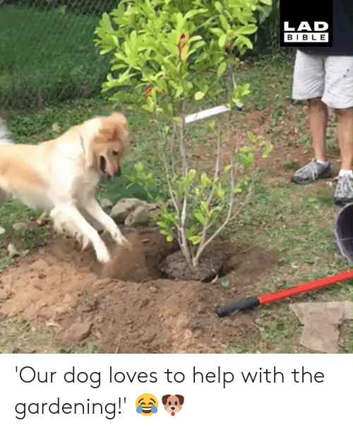 Gardening: LAD  BIBLE 'Our dog loves to help with the gardening!' 😂🐶