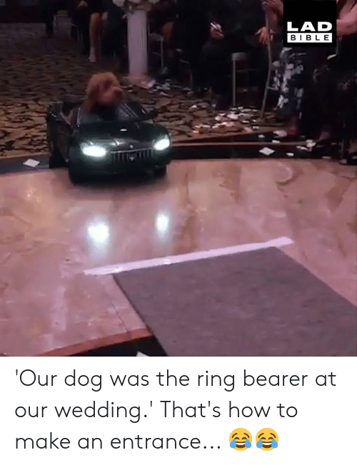 The Ring: LAD  BIBLE 'Our dog was the ring bearer at our wedding.' That's how to make an entrance... 😂😂