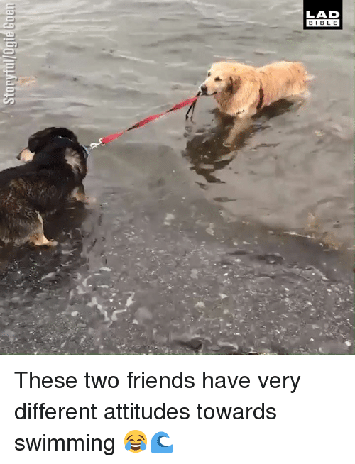 Dank, Friends, and Bible: LAD  BIBLE These two friends have very different attitudes towards swimming 😂🌊