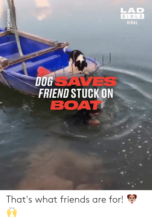 that's what friends are for: LAD  BIBLE  VIRAL  DOGSAVES  FRIEND STUCK ON  BOAT  [NEWSFLARE] That's what friends are for! 🐶🙌
