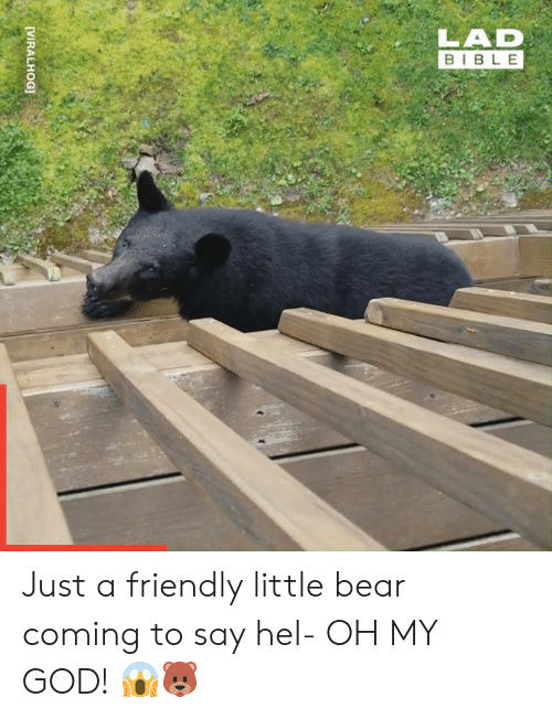 little bear: LAD  BIBLE  [VIRALHOG] Just a friendly little bear coming to say hel- OH MY GOD! 😱🐻