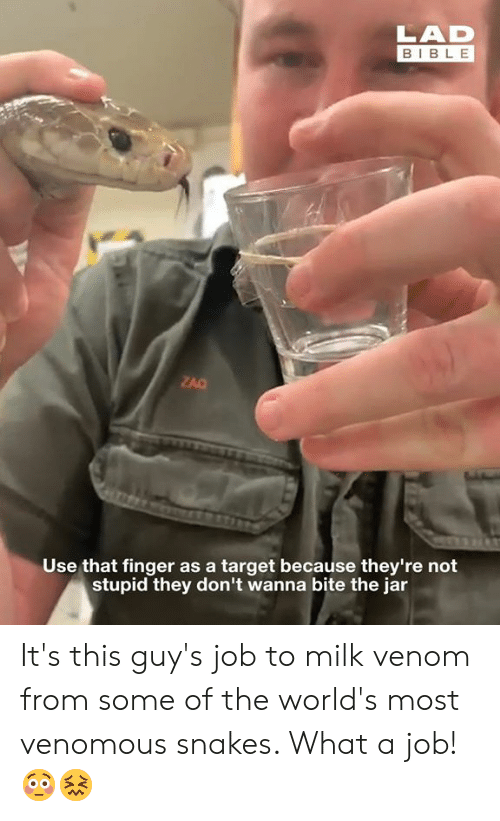 Snakes: LAD  BIBLE  ZAC  Use that finger as a target because they're not  stupid they don't wanna bite the jar It's this guy's job to milk venom from some of the world's most venomous snakes. What a job! 😳😖