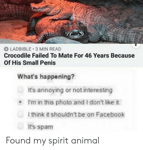 on facebook: LADBIBLE 3 MIN READ  Crocodile Failed To Mate For 46 Years Because  Of His Small Penis  What's happening?  It's annoying or not interesting  P'm in this photo and I don't like it  1think it shouldn't be on Facebook  It's spam Found my spirit animal