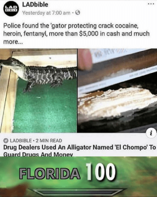 Cocaine: LADbible  LAD  BIBLE  Yesterday at 7:00 am.  Police found the 'gator protecting crack cocaine,  heroin, fentanyl, more than $5,000 in cash and much  more..  i  LADBIBLE 2 MIN READ  Drug Dealers Used An Alligator Named 'El Chompo' To  Guard Druas And Monev  FLORIDA 00