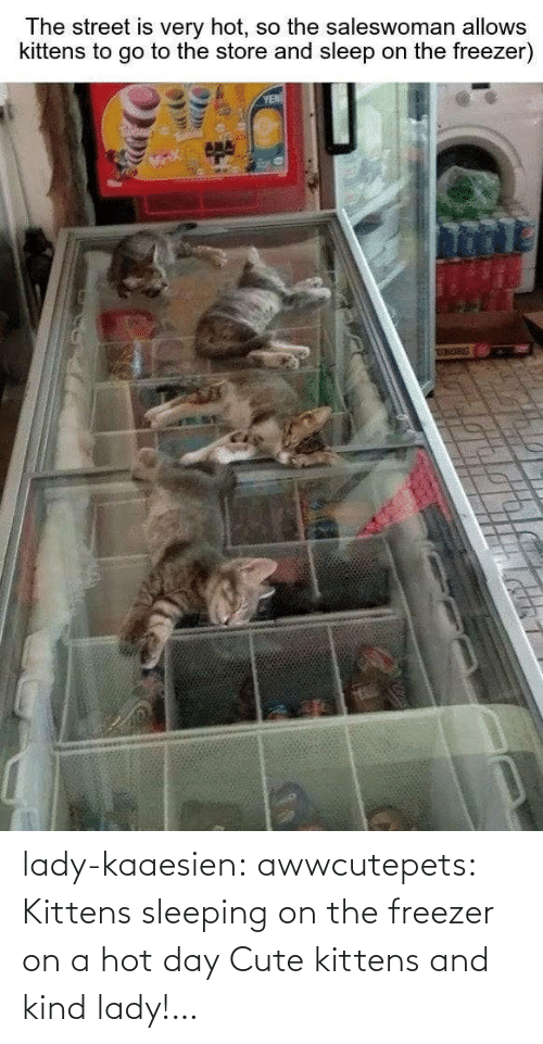 cute kittens: lady-kaaesien: awwcutepets: Kittens sleeping on the freezer on a hot day Cute kittens and kind lady!…