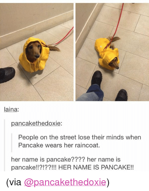"""laina: laina:  pancakethedoxie:  People on the street lose their minds when  Pancake wears her raincoat.  her name is pancake???? her name is  pancake!!?!??!!! HER NAME IS PANCAKE!! <p>(via <a class=""""tumblelog"""" href=""""https://tmblr.co/mLMdLgM7fQutt8GZUVdbZ2A"""" target=""""_blank"""">@pancakethedoxie</a>)</p>"""